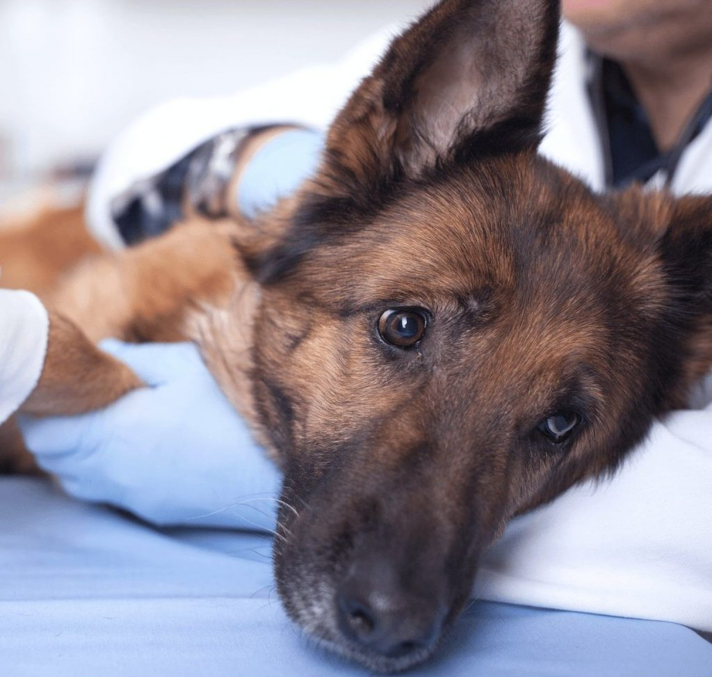 why-you-need-pet-insurance